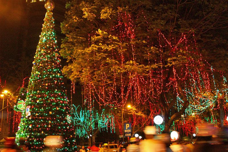 đèn led trang trí cây